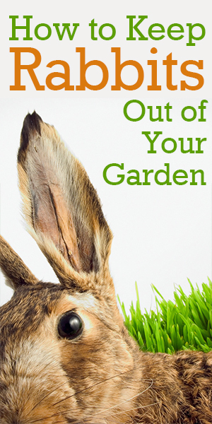 How to keep rabbits out of your garden 28 images How do you keep rabbits out of your garden