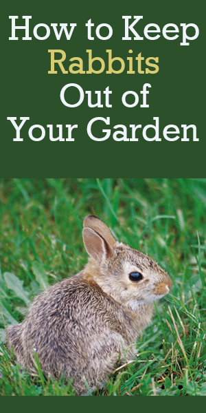 How to keep rabbits out of your garden rabbit resistant - How to keep rabbits out of a garden ...
