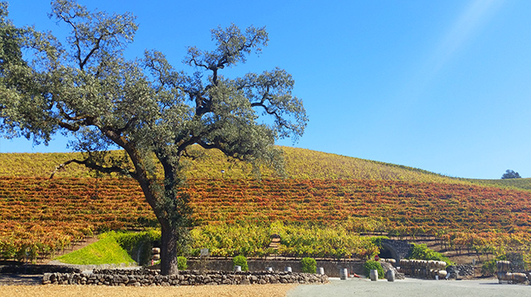 Sonoma - Hidden Gems in California's Original Wine Country