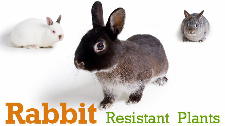 How to Keep Rabbits Out of Your Garden –  List of Rabbit Resistant Plants